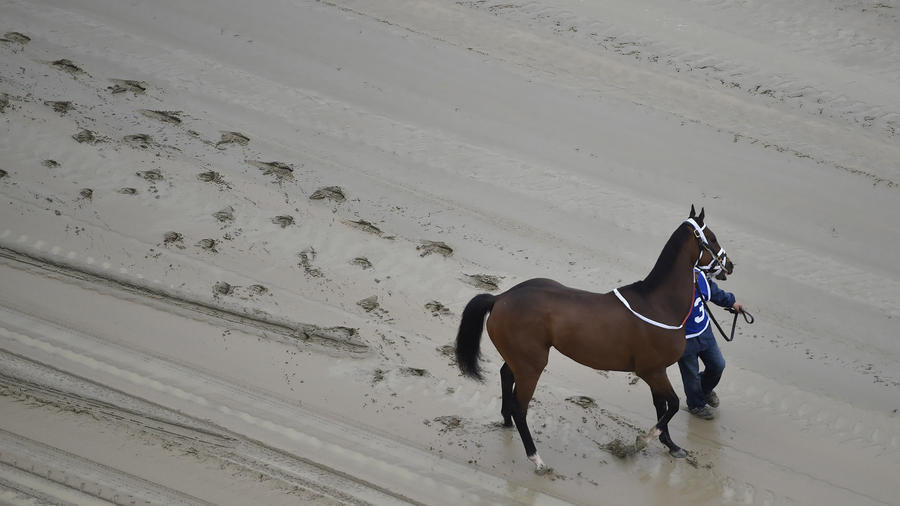 Investigations into horses' deaths ongoing